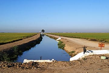 Canal de Distribución a la Margen Izquierda de la Zona Arrocera del Guadalquivir